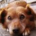 hunde trennungsangst