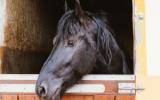 Bachblütenmischung Nr. 121 Ängstliches Pferd
