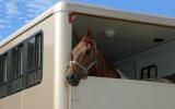 Bachblütenmischung Nr. 122 Transportstress bei Pferden